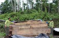 Quảng Nam: Phát hiện 20m3 gỗ không rõ nguồn gốc tại xưởng mộc