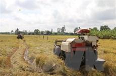 Bàn giải pháp tiêu thụ lúa cho nông dân khi giá đang xuống thấp