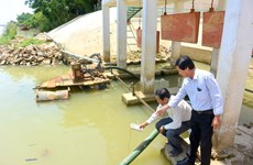 Nước sinh hoạt nhiễm mặn, thành phố Đà Nẵng vất vả ứng phó