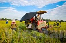 Nông dân vùng ngập lũ thu hoạch dứt điểm vụ lúa Đông Xuân