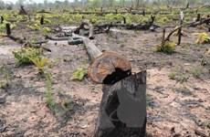 Gia Lai: Điều tra, xử lý nghiêm vụ phá rừng tại xã biên giới Ia Mơ