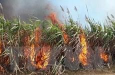 Gia Lai: Cháy hơn 45ha mía đang trong thời kỳ thu hoạch