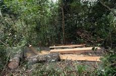 Phát hiện vụ phá rừng nghiêm trọng ở Vườn Quốc gia Phong Nha-Kẻ Bàng