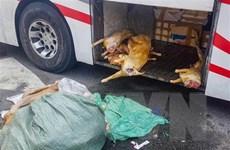Cần Thơ: Xử lý hơn 220kg thịt dê 'bẩn' chuẩn bị vào quán nhậu