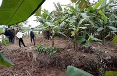 Thái Bình: Phát hiện xác ba người đàn ông chết tại sông Hóa