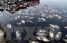 Lào Cai điều tra, làm rõ nguyên nhân cá chết trên sông Hồng
