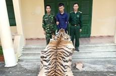 Quảng Ninh: Bắt giữ vụ vận chuyển trái phép da và xương hổ
