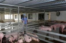 Kinh nghiệm phòng chống dịch tả lợn châu Phi từ TP. Hồ Chí Minh
