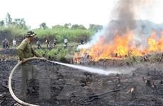 Công điện về tăng cường các biện pháp cấp bách phòng cháy rừng