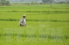 Thái Bình tạm hoãn họp để tập trung phòng, trừ sâu bệnh hại lúa