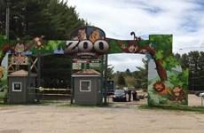 Chủ vườn thú đối mặt với án phạt nặng do ngược đãi động vật