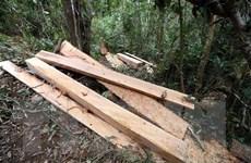 Quảng Bình: Phát hiện 4,6m3 gỗ trái phép trong trụ sở UBND xã