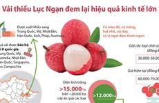 [Infographics] Vải thiều Lục Ngạn đem lại hiệu quả kinh tế lớn