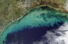 Cảnh báo về hiện tượng mở rộng ''vùng biển chết'' tại Vịnh Mexico