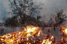 Nghệ An: Cháy rừng tại huyện Yên Thành, lửa vẫn đang âm ỉ
