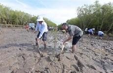 Điều chỉnh Đề án bảo vệ, phát triển rừng ven biển giai đoạn 2015-2020
