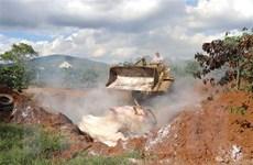Tạm cấp 1.270 tỷ đồng tiêu hủy lợn mắc bệnh dịch tả lợn châu Phi