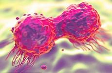 Phát hiện ''gót chân Achilles'' của loại gene gây nên ung thư