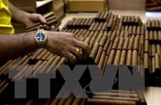 Brazil rút lại lệnh cấm bán cigar Cohiba nổi tiếng của Cuba