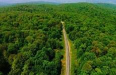 Rừng cổ Hyrcanian của Iran trở thành Di sản thế giới