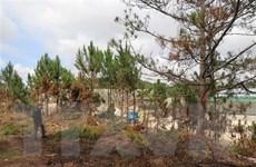 Lâm Đồng thẳng thắn nhìn nhận hạn chế trong quản lý bảo vệ rừng