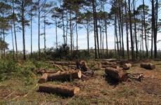 Kỳ họp thứ 8 HĐND tỉnh Đắk Nông: Nóng việc quản lý bảo vệ rừng thông