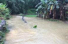 Cao Bằng: Mưa lớn ngập hơn 900 ngôi nhà, 1.000ha lúa và hoa màu