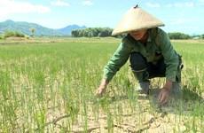 Sản xuất nông nghiệp đối diện với tình trạng hạn hán gia tăng