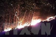 Quảng Trị: Hơn 300 chiến sỹ và người dân chữa cháy rừng trong đêm