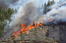 Tây Ban Nha: Cháy trên đảo Gran Canaria, 1.000 người sơ tán khẩn cấp