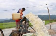 Nông dân Đắk Lắk chạy đua với thời gian để cứu diện tích lúa bị ngập