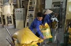 Giá gạo Việt Nam đi xuống do nhu cầu từ Trung Quốc giảm mạnh