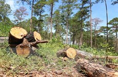 Lâm Đồng: Huyện Bảo Lâm thu hồi toàn bộ đất rừng đã giao cho thôn 4