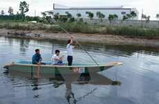 Hà Tĩnh: Xuất hiện cá sấu nặng 50kg trên sông Cầu Đông