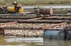 Tìm ra nguyên nhân hơn 130 tấn cá chết trên sông Đại Giang