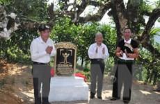 Chè Shan tuyết Giàng Pằng trở thành quần thể Cây di sản Việt Nam