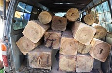 Phát hiện vụ vận chuyển gỗ nghi khai thác trong vùng rừng lõi