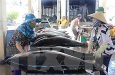 Xuất khẩu cá ngừ đại dương của Việt Nam tăng trưởng khá