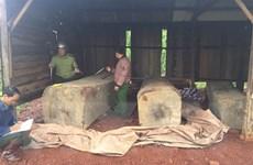 Đắk Nông: Thu giữ gần 10m3 gỗ được cất giấu tại rẫy hồ tiêu