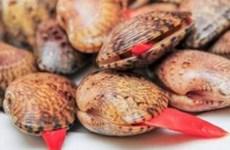 Cà Mau: Thực hư thông tin người dân tử vong do ăn sò lụa đỏ
