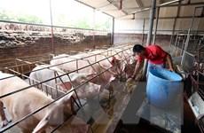Ngành chăn nuôi chủ động được nguồn cung dịp cuối năm
