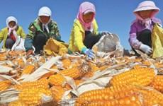 Vai trò của Trung Quốc trong đảm bảo an ninh lương thực thế giới