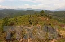 Vụ rừng thông bị hạ độc tại Lâm Đồng: Kỷ luật người đứng đầu đơn vị