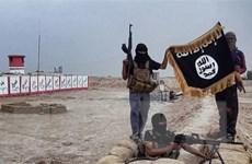 Nhóm phiến quân ở Ai Cập thề trung thành với thủ lĩnh mới của IS