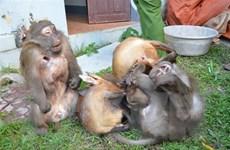 Điện Biên: Thu giữ số lượng lớn cá thể động vật hoang dã