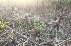 Thái Bình: Điều tra xử lý đối tượng xâm hại hơn 7.500m2 rừng phòng hộ