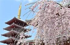Thủ tướng Nhật Bản liệu có qua được bê bối ''hoa anh đào''?