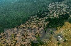 Colombia nhận thêm hàng triệu USD hỗ trợ bảo vệ rừng Amazon