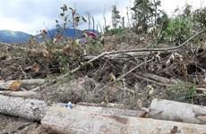Lâm Đồng sẽ xử lý nghiêm vụ phá rừng phòng hộ Sêrêpốk