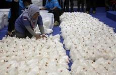 Indonesia triệt phá đường dây buôn bán 210kg tinh chất ma túy